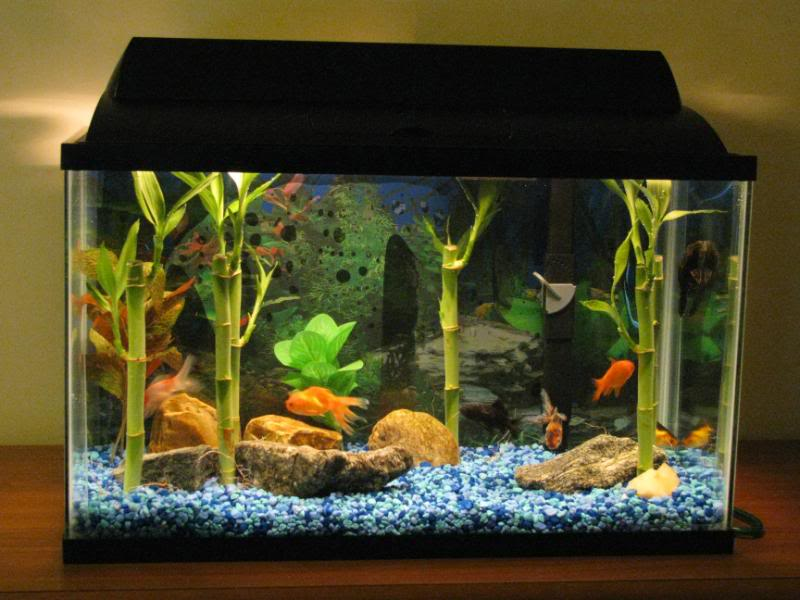 Benefits of Having a Pet Fish